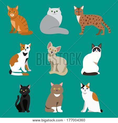 Cat breed cute pet portrait fluffy young adorable cartoon animal and pretty fun play feline sitting mammal domestic kitty vector illustration. Beautiful posing playful paw design.