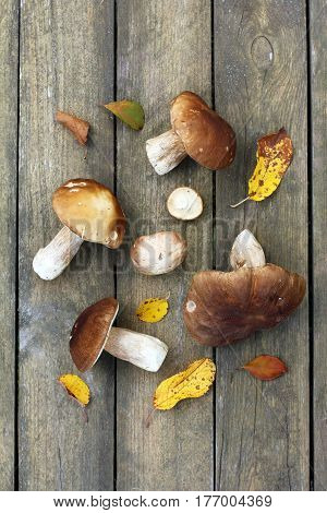 Edible mushrooms are laid out on wooden surface top view / fresh harvest from the forest