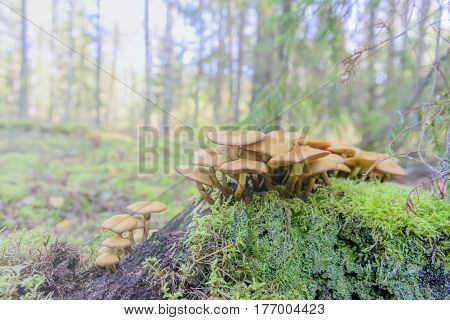 Poisonous Mushrooms Growing In The Wild Wood Collection Of Mushrooms And Berries In The Fall In The