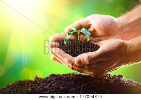 Man's hands planting the seedlings into the soil over nature green sunny background. Farmer holding Young plant, new life growth. Ecology, money saving, development or business concept