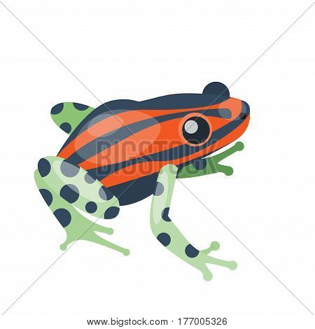 Frog cartoon tropical green red animal cartoon nature icon funny and isolated mascot character wild funny forest toad amphibian vector illustration. Graphic ecosystem croaking hop drawin.