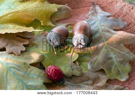 Side View of Autumnal Leaves and seasonal Fruits and Seeds Oak Acorn Briar Berry on the spot of warm light
