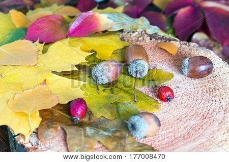 Seasonal foliage with Autumnal Stuff on Wood colorful Leaves Acorn Briar Berry