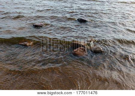 baltic sea, fin gulf coast in summer sunny day, warm day