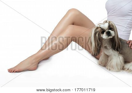 Beautiful slender female legs with silky skin hair removal depilation shugaring underwear. Little shih-tzu.