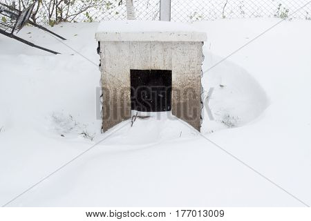 strong winter blizzard buried the dog house