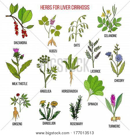 Best herbal remedies for liver cirrosis. Hand drawn set of medicinal herbs poster