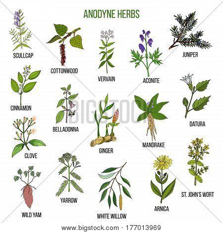 Anodyne herbs. Hand drawn vector set of medicinal plants