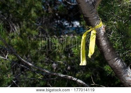 Yellow ribbon in sunlight tied around a pine tree.