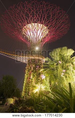 SINGAPORE - NOVEMBER 17: scenic night illumination of artificial tree and hanged pedestrian pathway at the place of famous Gardens by the Bay park in Singapore Singapore on November 17 2014.