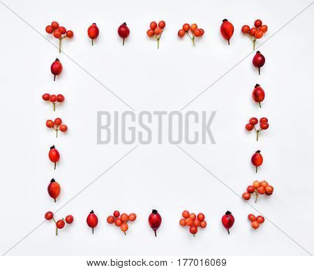 Bright red berries of dog rose and rowan berries in square frame on white background. Red berries floral ornament. Flat lay top view space for text