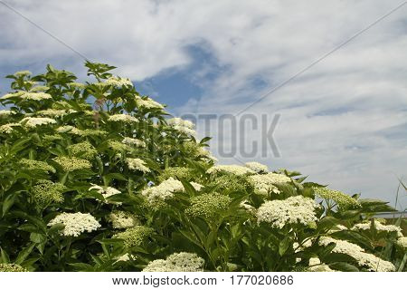 Flowers In A Danish Landscapes In The Summer