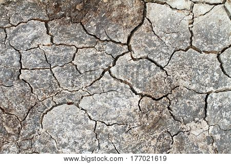 Cracked Earth In A Danish Landscapes In The Summer