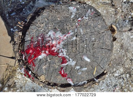A close up of the wooden block with blood of hen.