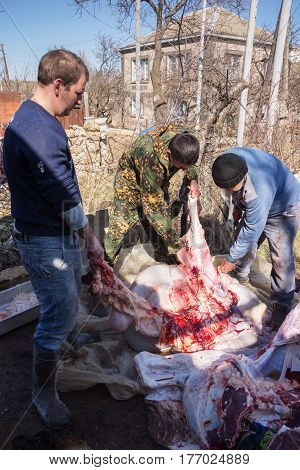 Three Butchers Cut The Carcass Of A Bull
