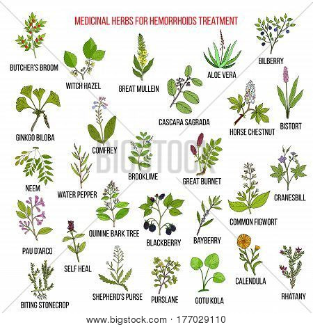 Best herbal remedies for hemorrhoids. Hand drawn vector set of medicinal plants