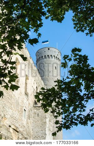 Tall Hermann tower and tree branches Toompea Governors garden Tallinn Estonia. Selected focus.