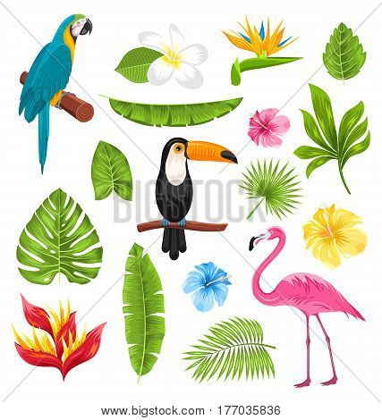 Illustration Set Tropical Flowers, Exotic Birds and Plants. Collection Elements Isolated on White Background - Vector