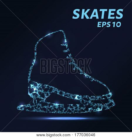 Skates Are Composed Of Dots, Lines And Triangles. The Polygon Shape In The Form Of A Silhouette Of T