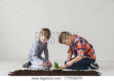 The brothers make planting in the soil on the floor.
