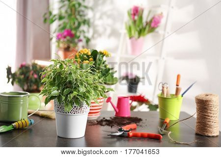 Fresh spring plant with gardener equipment on table