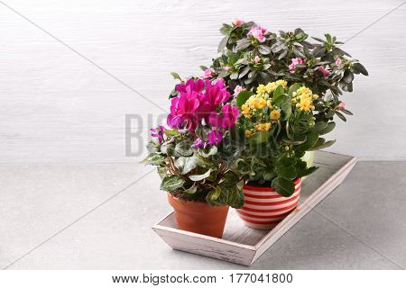 Beautiful plants on white wooden background
