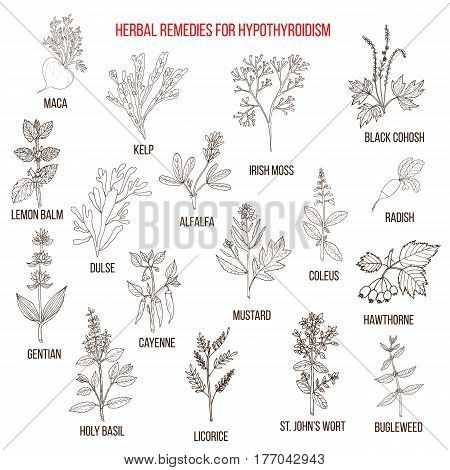 Best herbal remedies for hypothyroidism. Hand drawn set of medicinal herbs