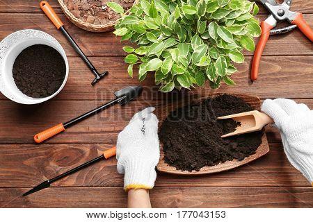 Female gardener planting spring plant on wooden table