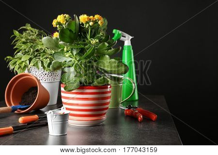 Beautiful plants and gardener equipment on table