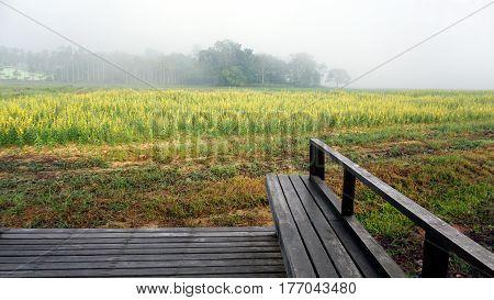 Por thuea. Crotalaria juncea, people known as brown hemp, Indian hemp, Madras hemp, or sunn hemp, it's a tropical Asian plant and has yellow flowers also a soil improving crop via nitrogen fixation.