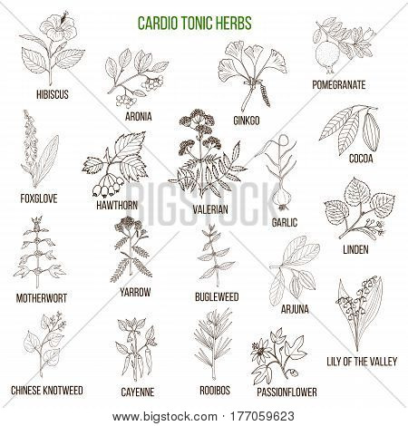 Best herbs for cardio tonic. Hand drawn set of medicinal herbs