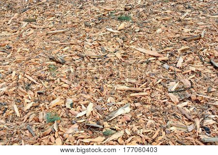 Sawdust from wood after cutting trees in the forest. Background of the bark of a tree on the ground