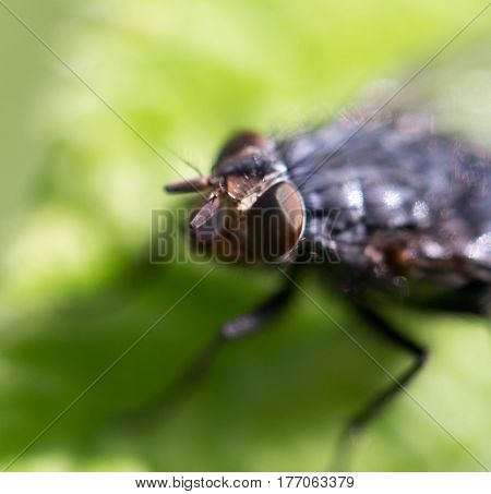 fly in nature. macro . Photo taken by professional camera and lens