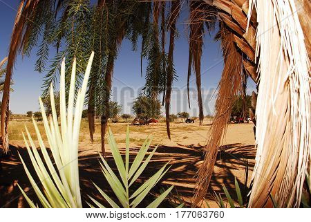 Palm trees in a hot sunny day, cars on the horizon, a hot earth saving the shadow. Light, shadow, South Africa