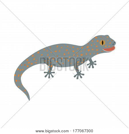 Lizard, Tokay, Gecko, Calling gecko isolate white vector illustration for children