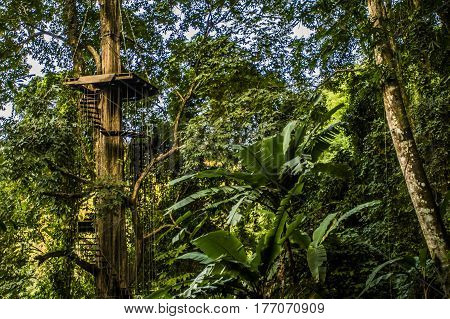 Treehouse high up in a dense jungle landscape