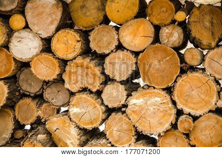 firewood chopped logs stacked forest, environmental, ecology, material, stump