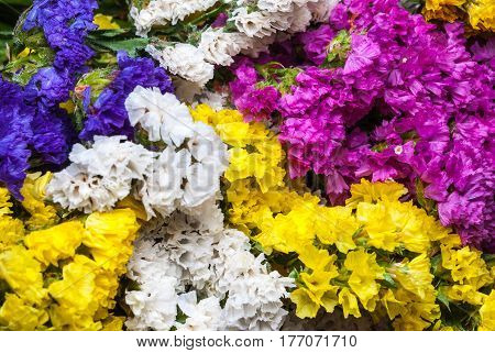 Closeup To Beautiful Colorful Statice Flowers Background