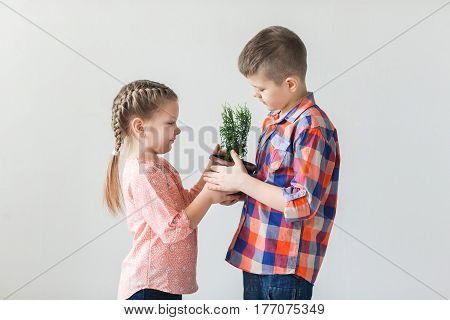Cute kids boy and girl holding young plant in a pot.
