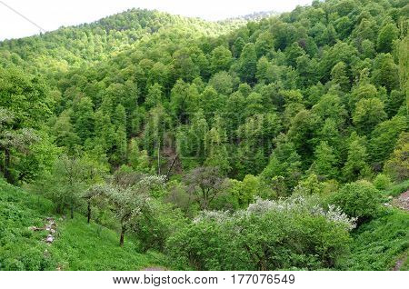 Green mountains covered with deciduous forest on a spring day. Spring mountain landscape.