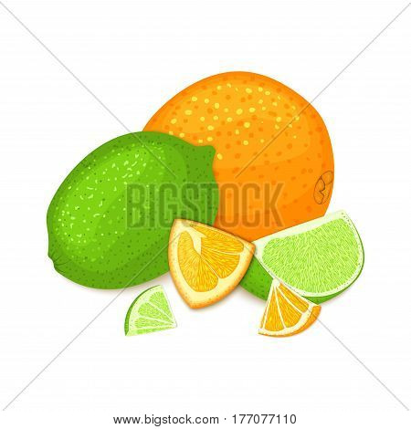 Composition of tropical orange and lime fruits. Ripe vector citrus orange and lemon fruit whole and slice appetizing looking. Group of tasty juicy fruits for the packaging design of juice healthy food.