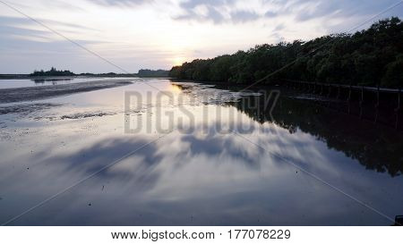 The calm tropical beach and Mangrove forest.