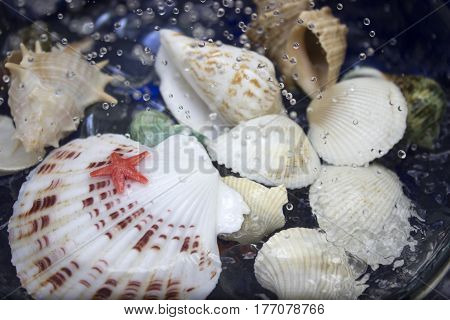 Various cockleshells in water with drops and sprays