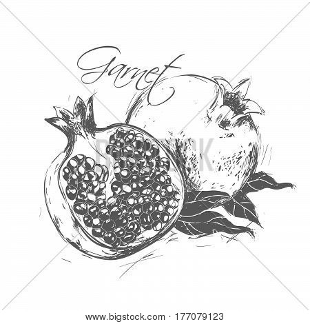 Pomegranate made in the style of a sketch. See also other types of fruit.