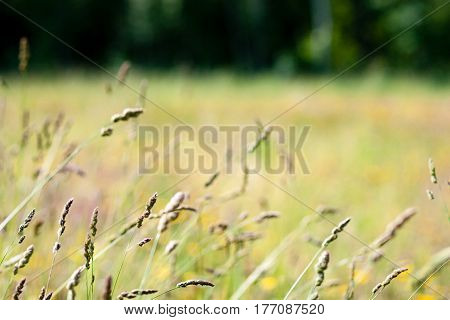 Closeup Of Beautiful Green Plants With Blur Background