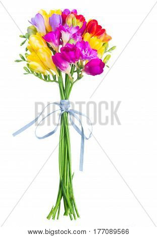 Bouquet of fresh freesia flowers close up isolated on white background