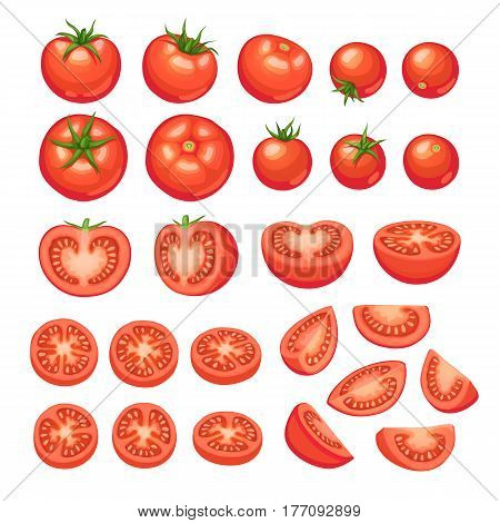 Collection of chopped tomatoes isolated on white background.  Tomato slices illustration.
