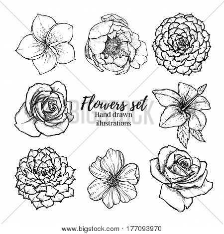 Hand Drawn Vector Illustration - Flowers Set (succulent, Rose, Peony, Tropical Flower). Perfect For