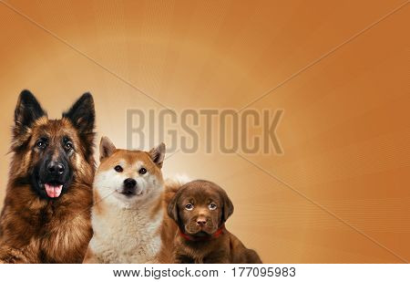 Group of dogs sitting in front of a brown background.
