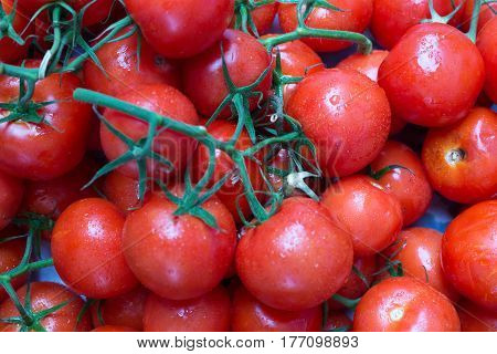Red ripe tomatoes on a branch with drops of dew